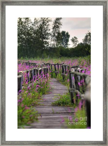 Walking In Magic... Framed Print