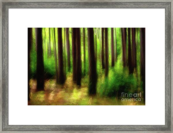 Walking In The Woods Framed Print
