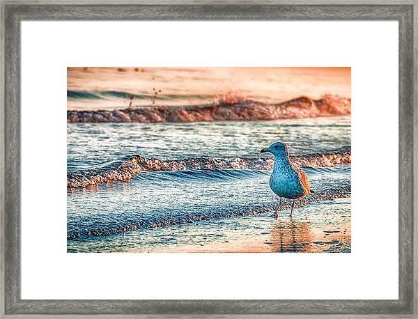 Walking On Sunshine Framed Print