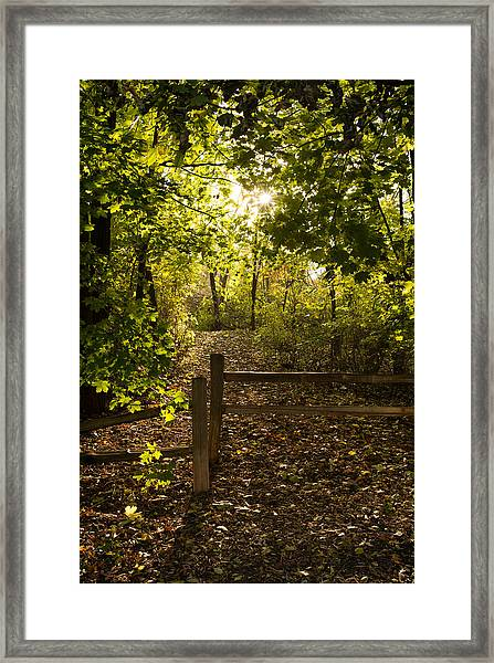 Walking Path Framed Print
