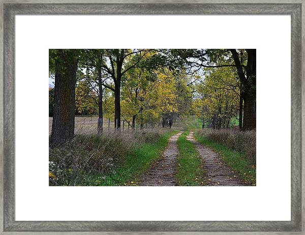 Walnut Lane Framed Print