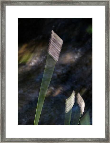 Wands Over Water Framed Print