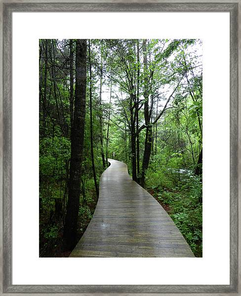 Framed Print featuring the photograph Wang Lang Nature Reserve, China by Breck Bartholomew