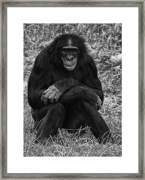 Framed Print featuring the photograph Wanna Be Like You by Nick Bywater