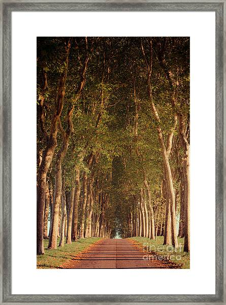 Warm French Tree Lined Country Lane Framed Print
