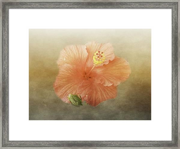 Warm Hibiscus Framed Print