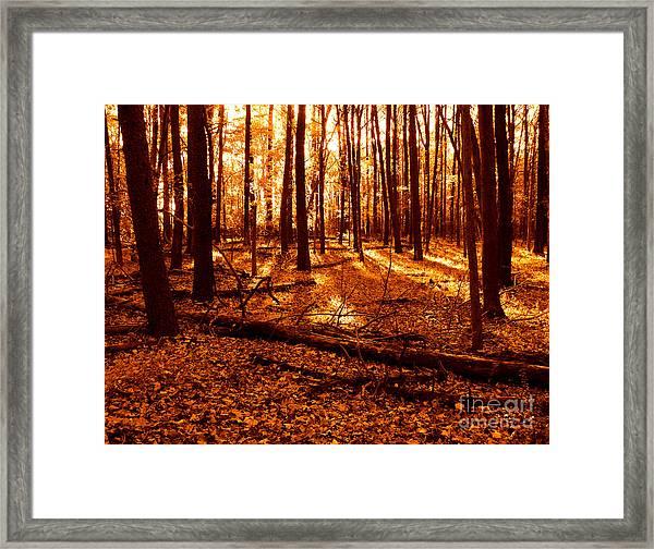 Warm Woods Framed Print