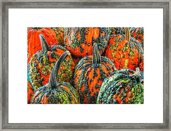 Warty Pumkins  Framed Print
