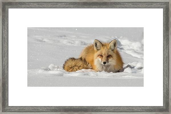 Watchful Eyes  Framed Print