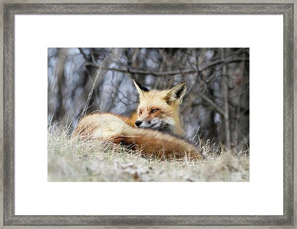 Watchful Gaze Framed Print