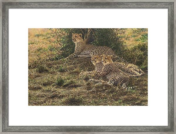 Watching Mam Framed Print