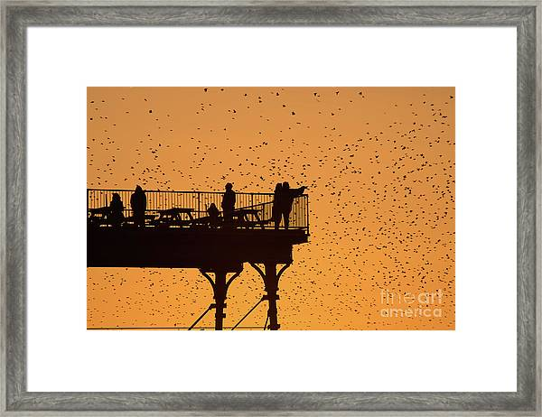 Watching The Sunset And Starlings In Aberystwyth Wales Framed Print