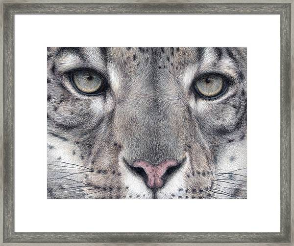 Watching You...snow Leopard Framed Print