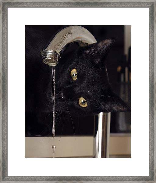 Water Bug Framed Print