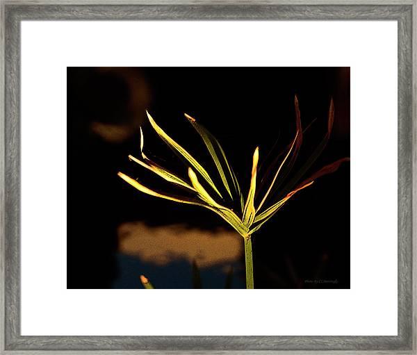 Water Grass Framed Print