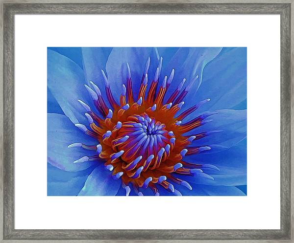 Water Lily Center Framed Print
