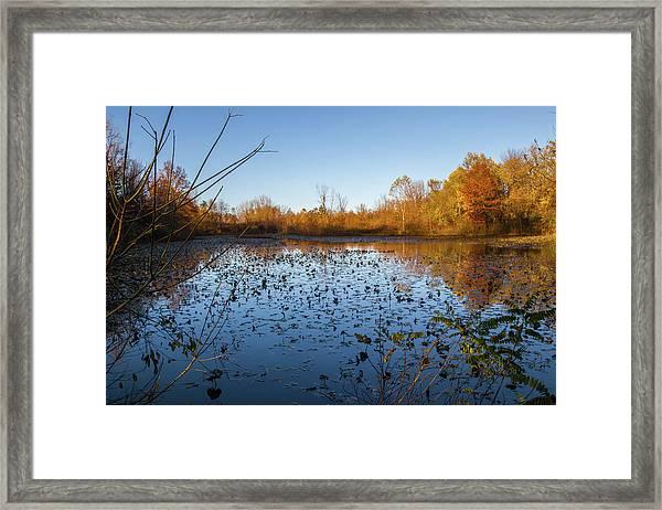 Water Lily Evening Serenade Framed Print