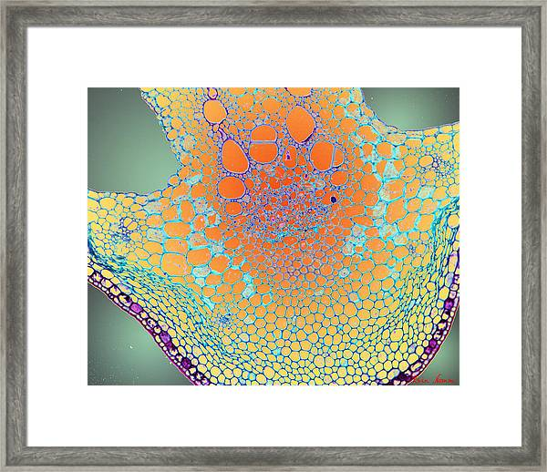 Water Lily Homage Framed Print