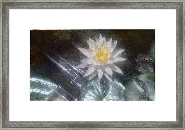 Water Lily In Sunlight Framed Print