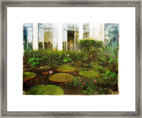 Water Lily Pond Framed Print