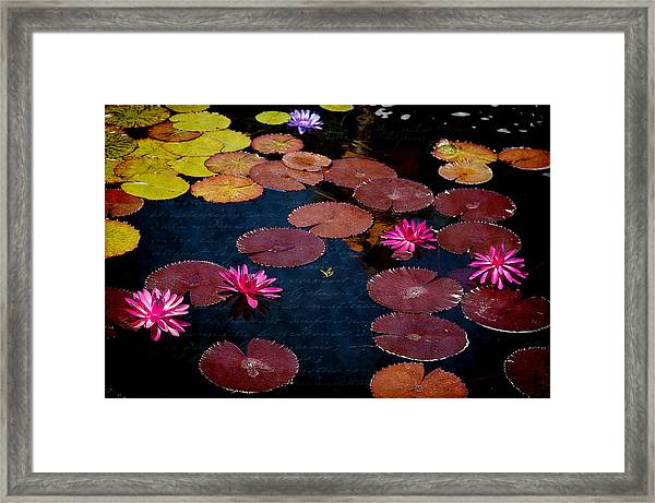 Water Lily World Framed Print