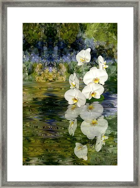 Water Orchid Framed Print