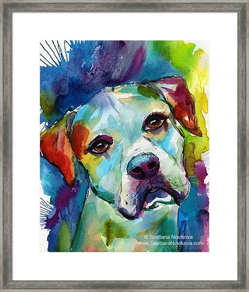 Watercolor American Bulldog Painting By Framed Print