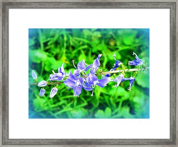 Watercolor Blooms Framed Print