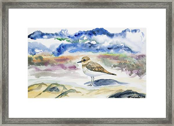 Watercolor - Double-banded Plover On The Beach Framed Print