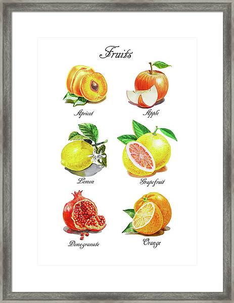 Watercolor Fruit Illustration Collection I Framed Print