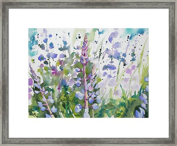 Watercolor - Lupine Wildflowers Framed Print