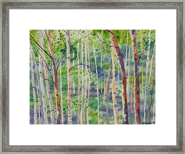 Watercolor - Magical Aspen Forest After A Spring Rain Framed Print