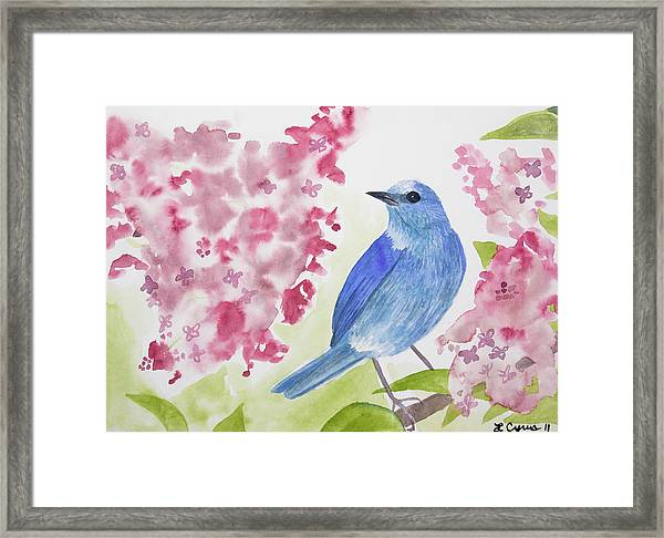 Watercolor - Mountain Bluebird Framed Print