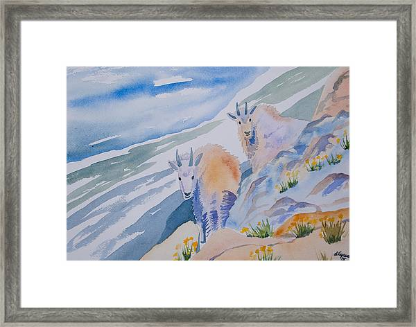 Watercolor - Mountain Goats On Quandary Framed Print