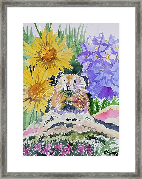 Watercolor - Pika With Wildflowers Framed Print