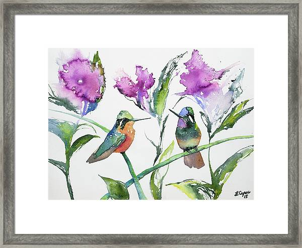 Watercolor - Purple-throated Mountain Gems And Flowers Framed Print