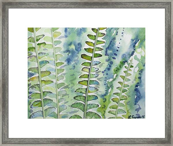 Watercolor - Rainforest Fern Impressions Framed Print