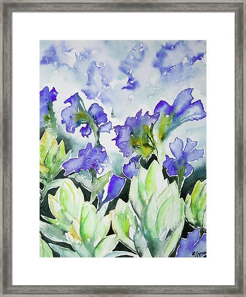 Watercolor - Rocky Mountain Wildflowers Framed Print