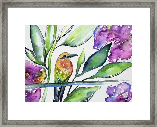 Watercolor - Rufous Motmot Framed Print
