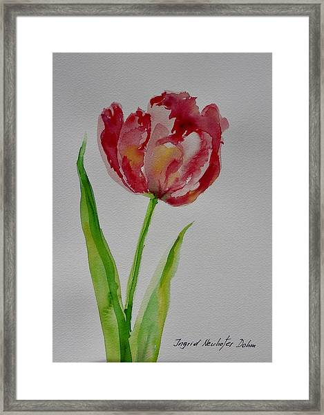 Watercolor Series No.  228 Framed Print