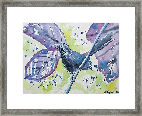 Watercolor - Smooth-billed Ani Framed Print