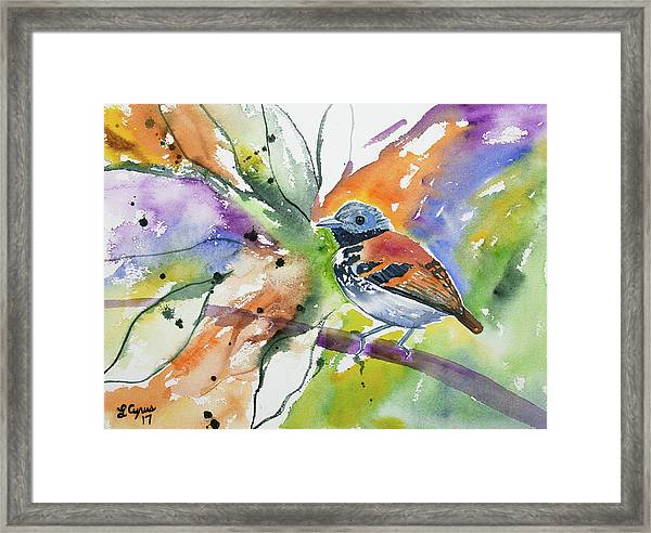 Watercolor - Spotted Antbird Framed Print