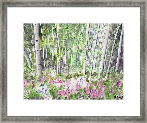Watercolor - Summer Aspen Glade Framed Print