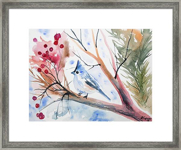 Watercolor - Tufted Titmouse With Winter Berries Framed Print