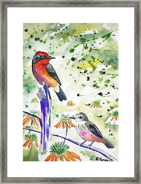 Watercolor - Vermilion Flycatcher Pair In Quito Framed Print