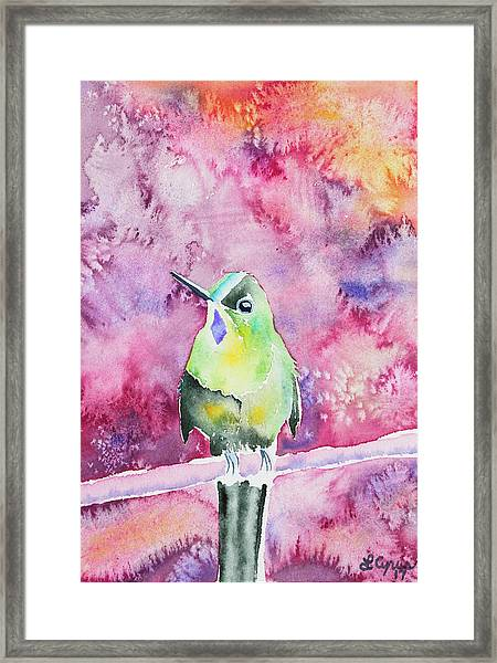 Watercolor - Violet-tailed Sylph Framed Print