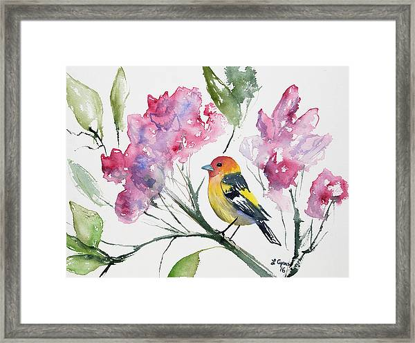 Watercolor - Western Tanager In A Flowering Tree Framed Print
