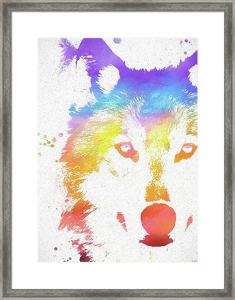 Watercolor Wolf Framed Print