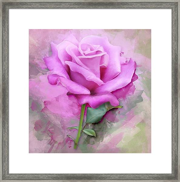 Watercolour Pastel Lilac Rose Framed Print