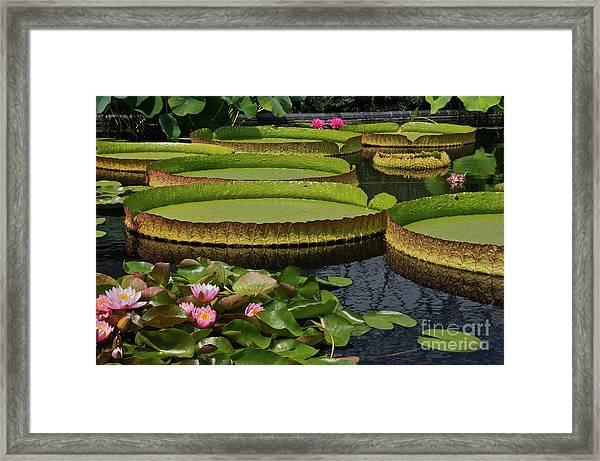 Waterlilies North And South Framed Print